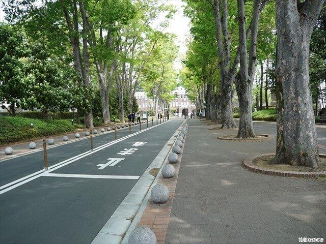 成蹊大学の欅並木