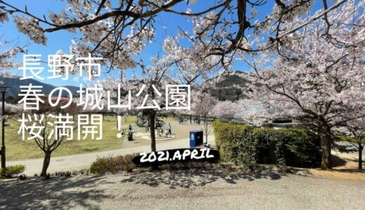 長野市城山公園は桜が満開!